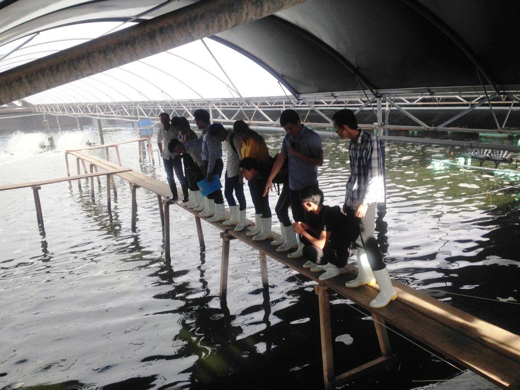 Sinh viên tham quan hồ nuôi tôm của công ty cổ phần Chăn nuôi CP