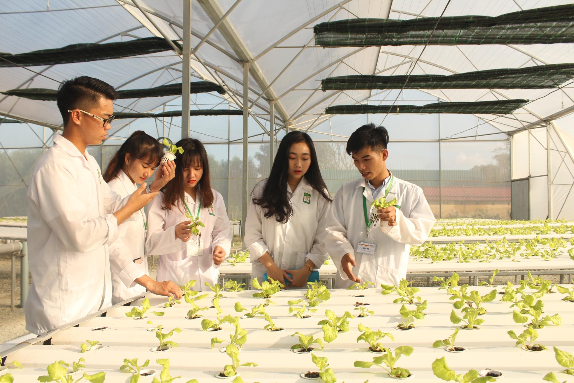 Sinh viên tại vườn rau thủy canh